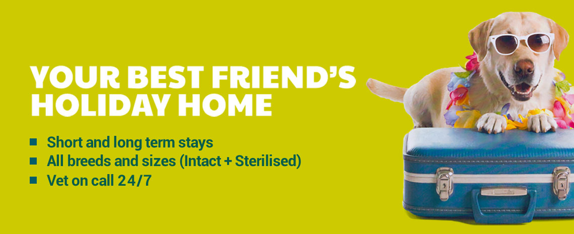 Your best friend's holiday home